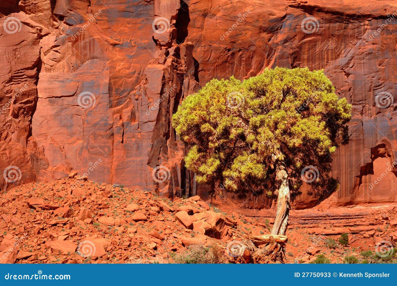 Falaise et arbre rouges