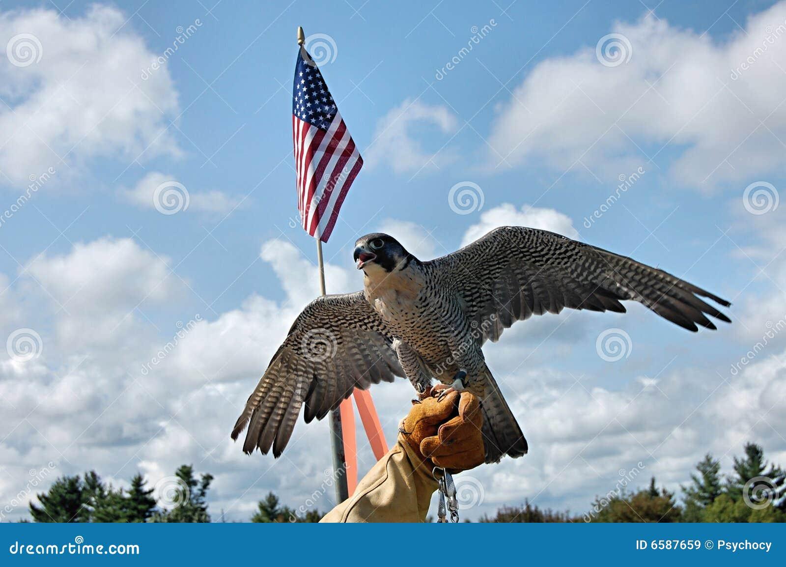 Falcão do peregrino com bandeira