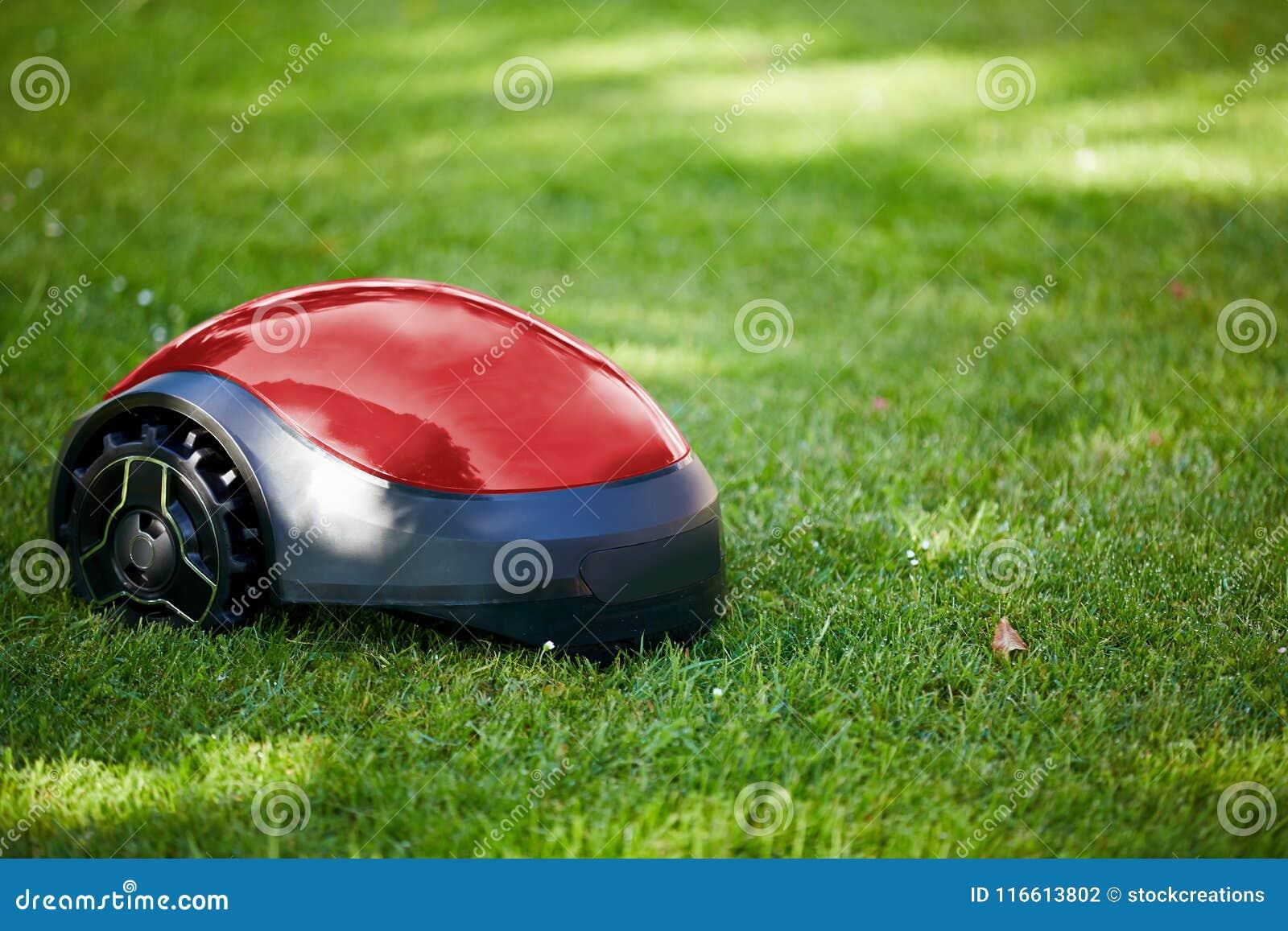 Falciatrice da giardino del robot sul prato di estate nel giardino