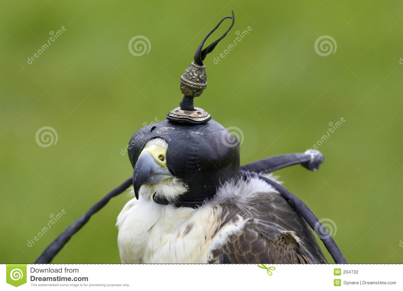 Download Falco Dell'ibrido Del Lanner E Di Straniero Fotografia Stock - Immagine di testa, animale: 204732