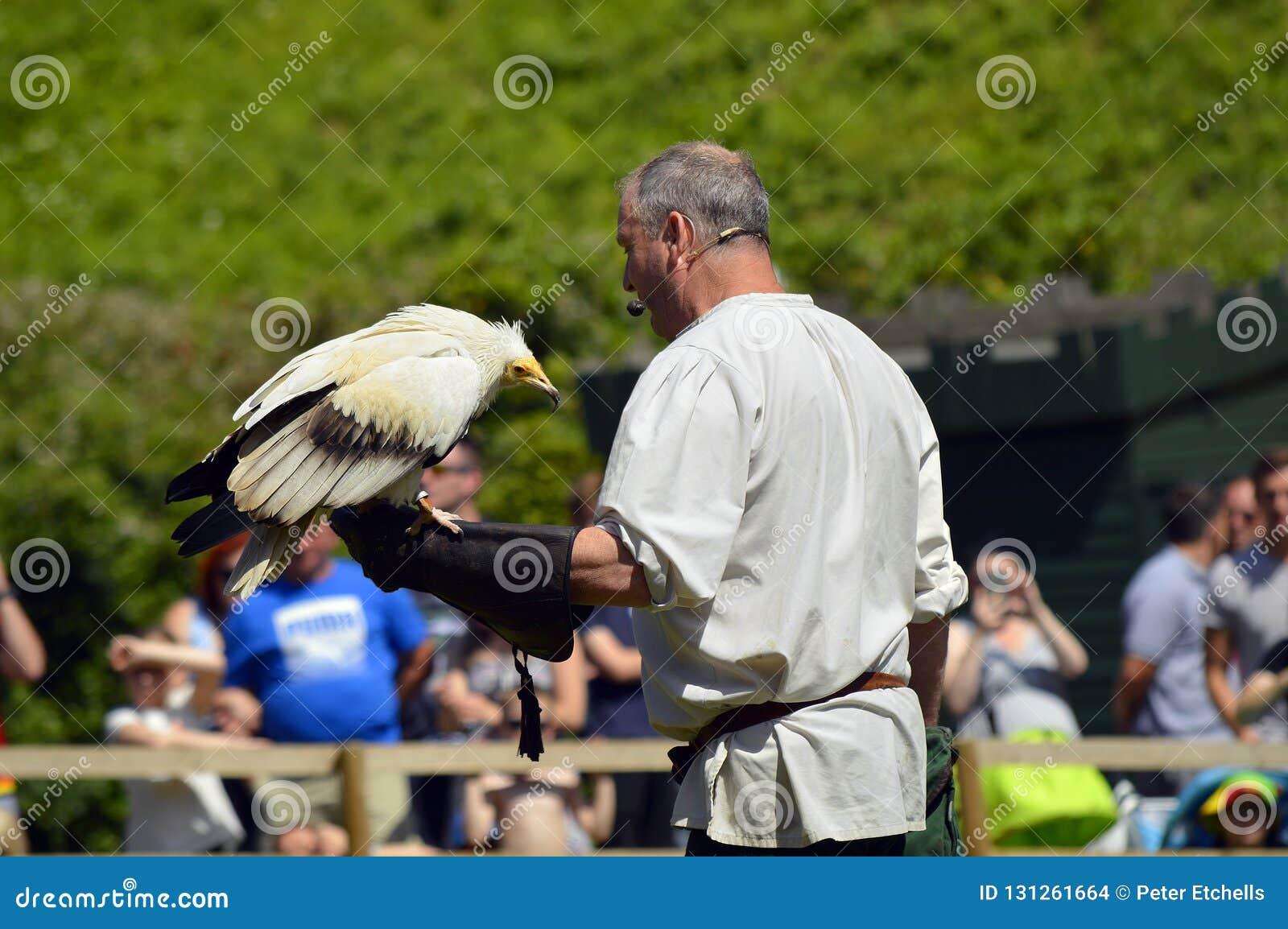 Falcoeiro com um abutre egípcio