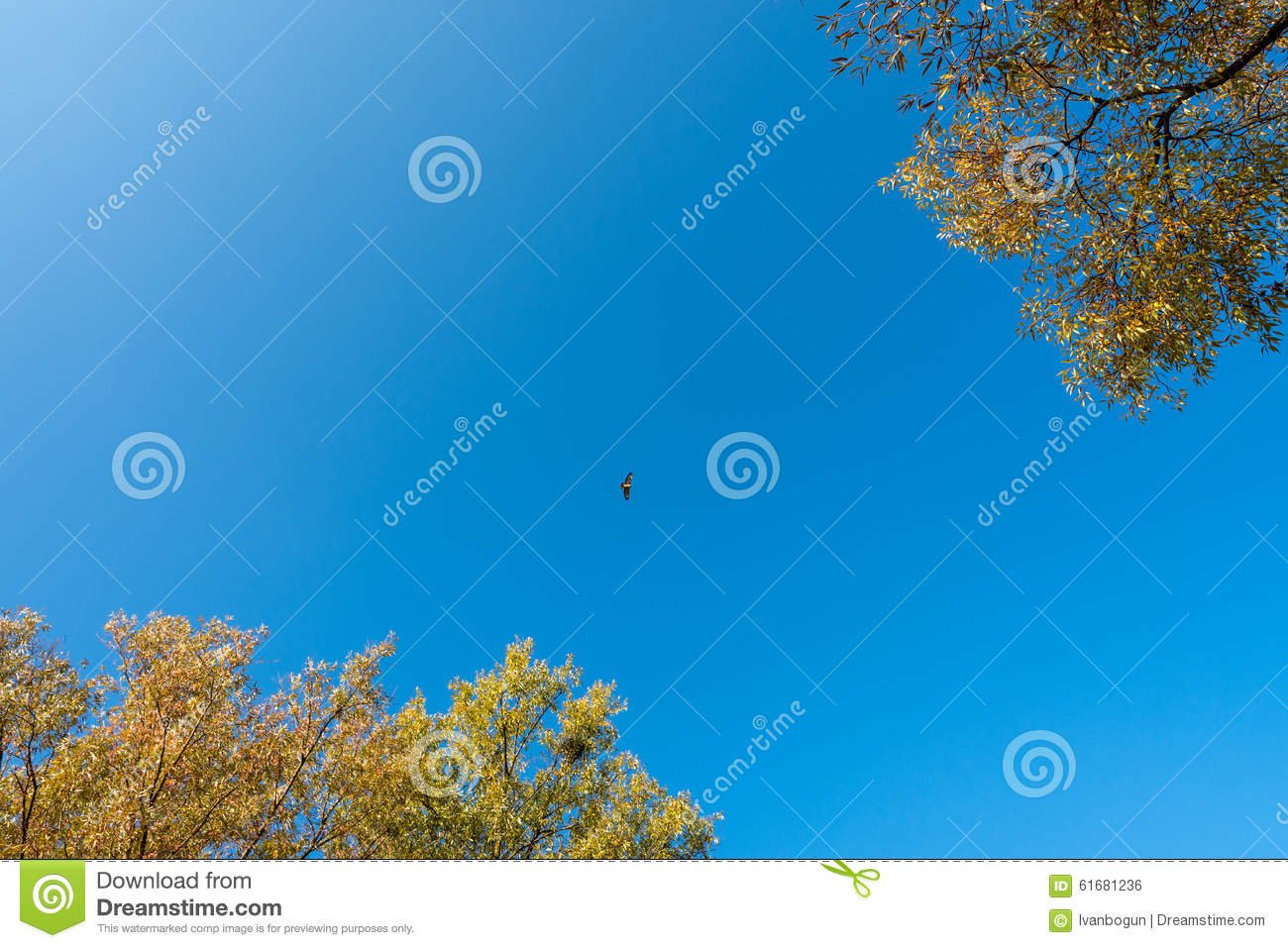 Falcon Fly Stock Photo - Image: 61681236