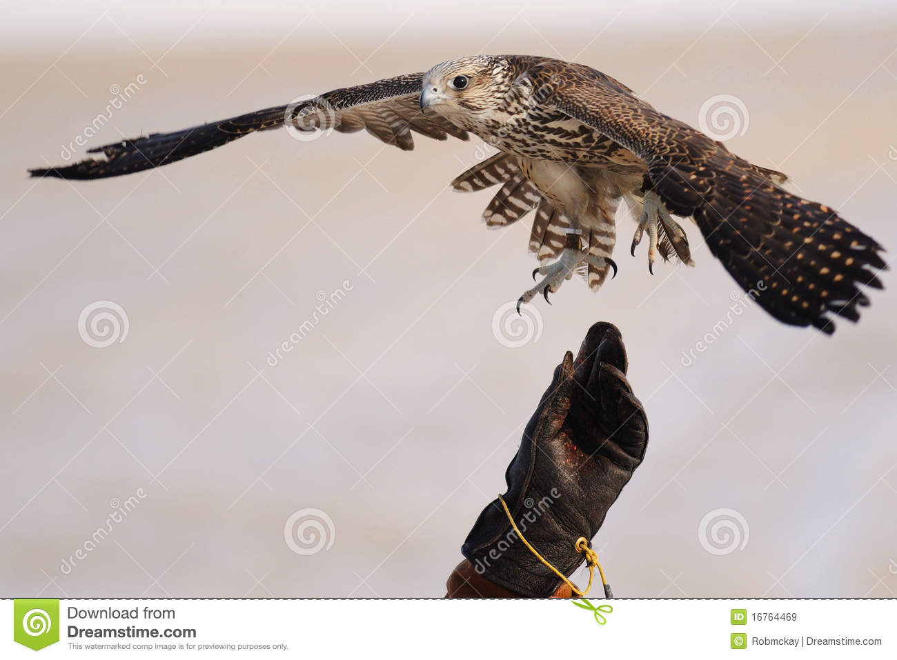 Falconry Information Clearinghouse  Home Page