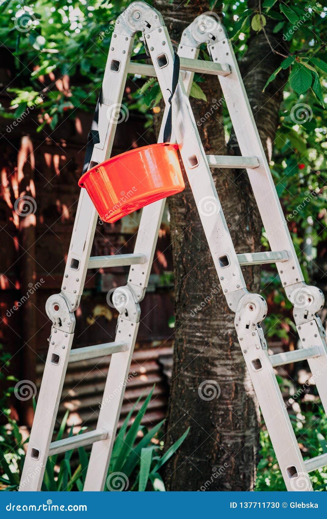 Falcowanie schody aluminiowi stojaki pod drzewem