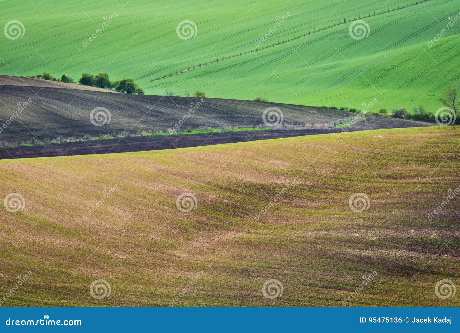 Faliści wzgórza podczas wiosna czasu w Południowym Moravia