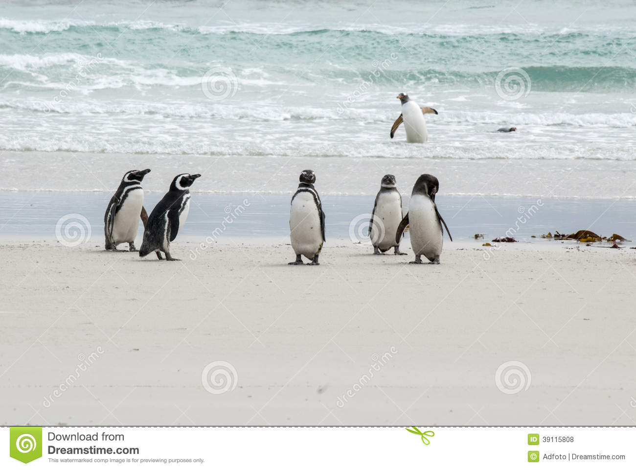 Falkland Islands - Pinguïnen