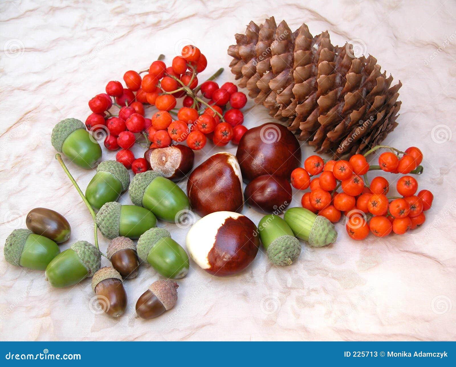 Download Fall stock image. Image of rowan, rowanberry, acorns, acorn - 225713