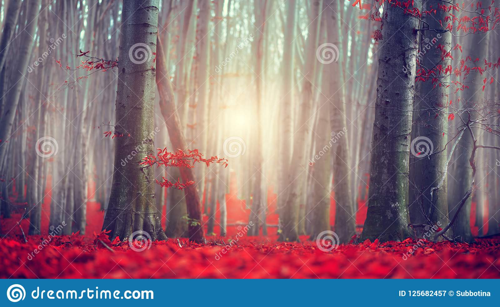 Fall. Autumn landscape. Beautiful autumnal park with bright red leaves and old dark trees. Beauty nature