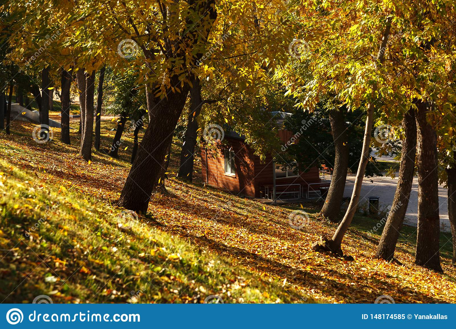 Fall Autumn Landscape With Trees Full Of Colorful Falling Leaves