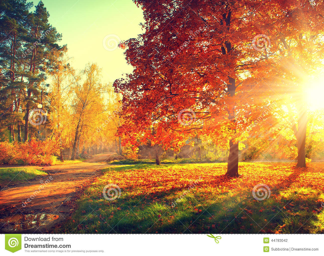 Fall Autumn Park Stock Photo Image 44783042