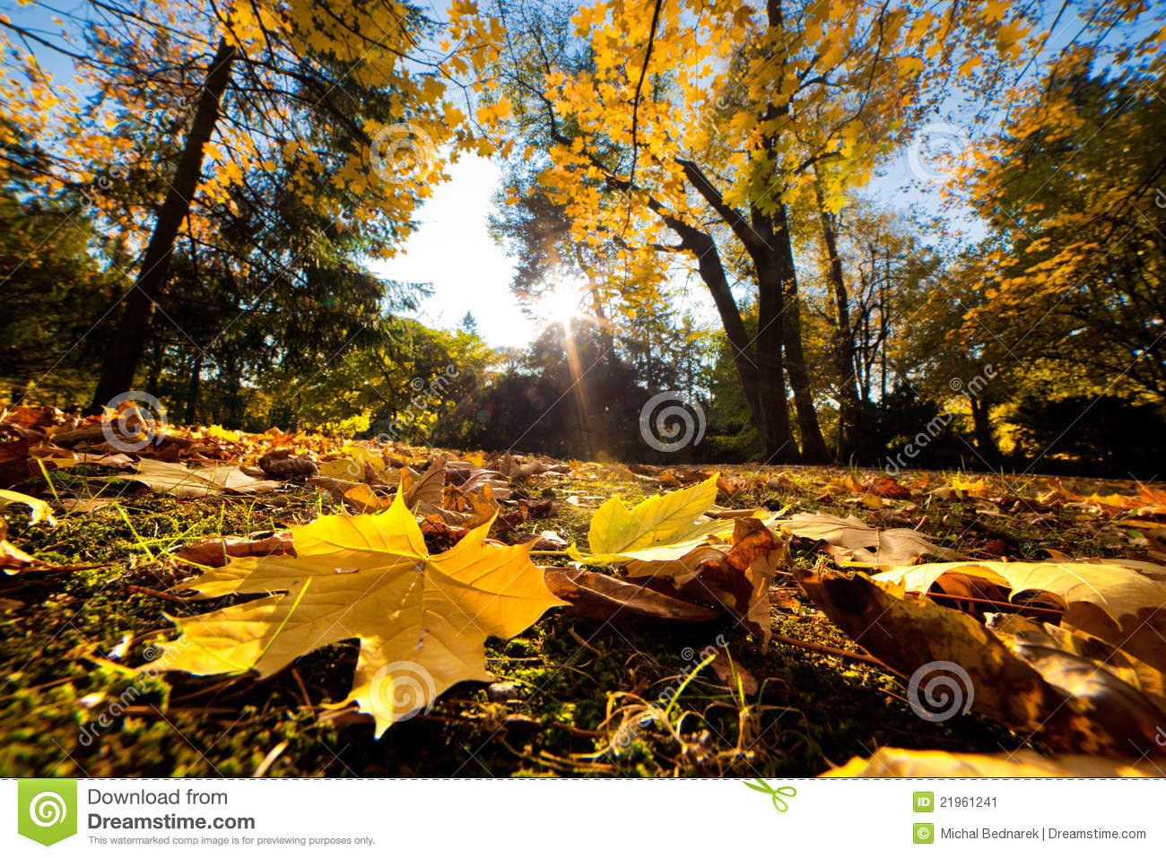 Download Fall Autumn Park. Falling Leaves Stock Image - Image of gold, leisure: 21961241
