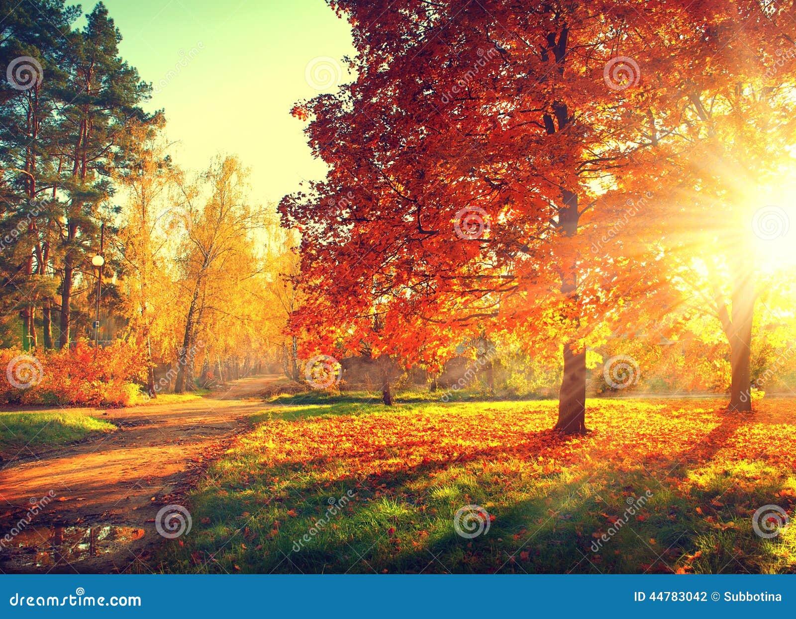 Fall Bäume, die noch mit etwas goldenen Farben grün bleiben