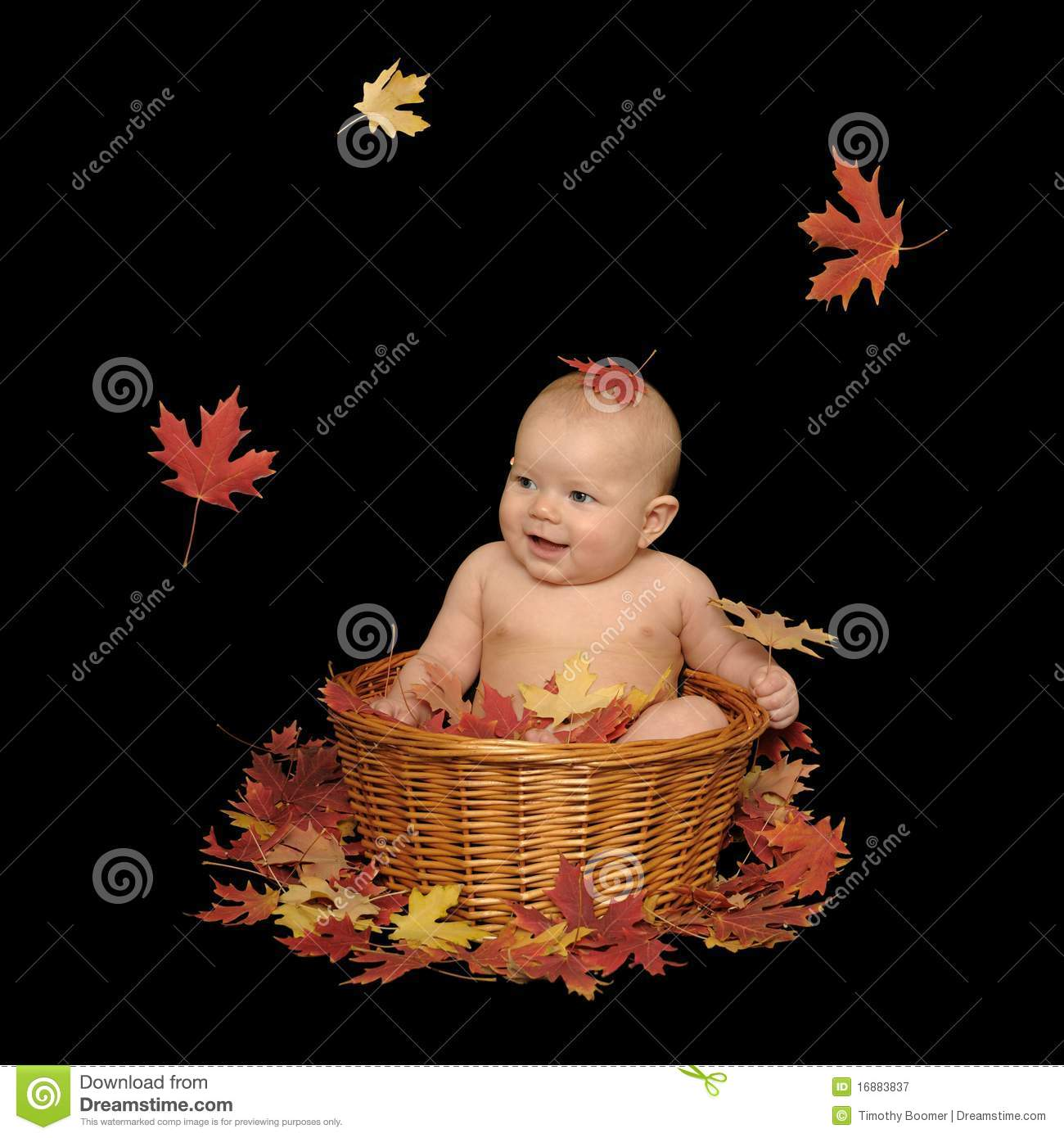 Adorable baby girl sitting in a basket with fall leaves isolated on a black background all of the leaves are real including the three in the air