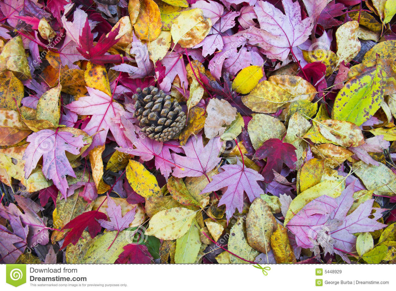 Fall Background Stock Image Image Of Fall Tree Calm 5448929