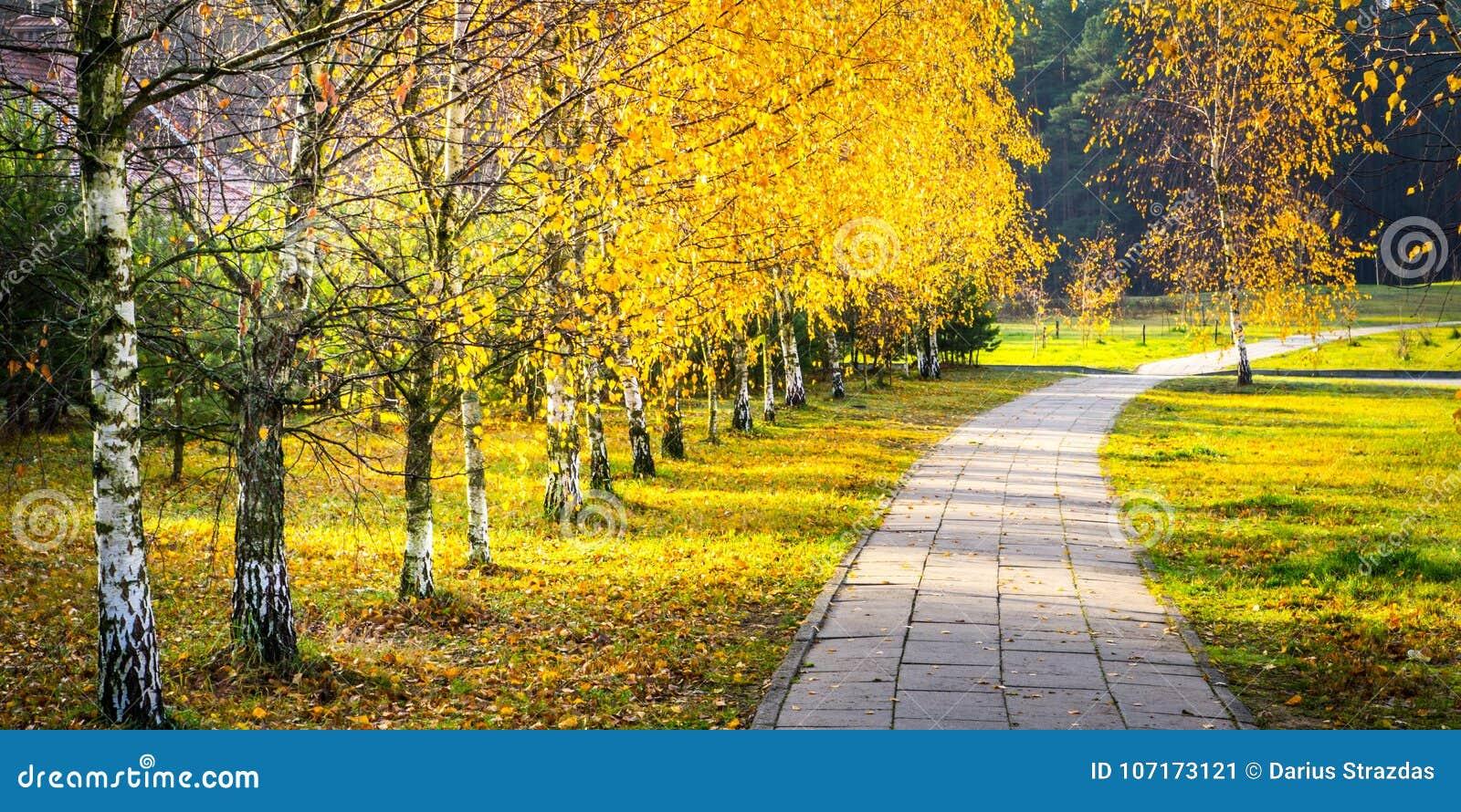 Fall birch park