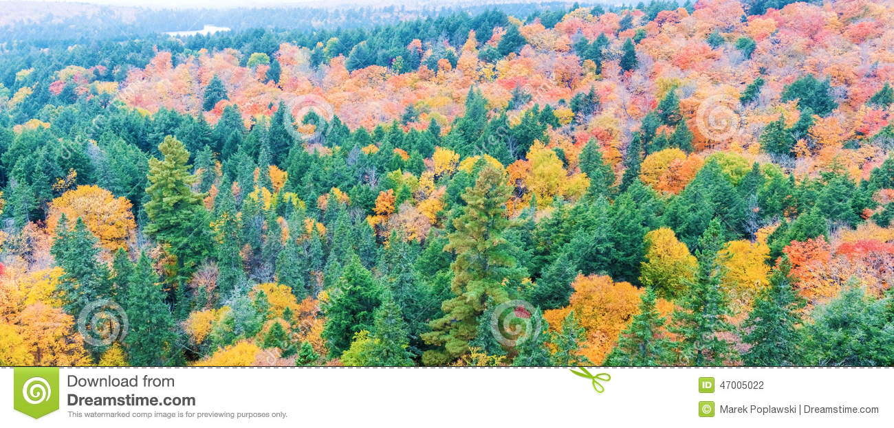 Fall Colors Algonquin Park, Ontario, Canada. Stock Photo - Image of ...