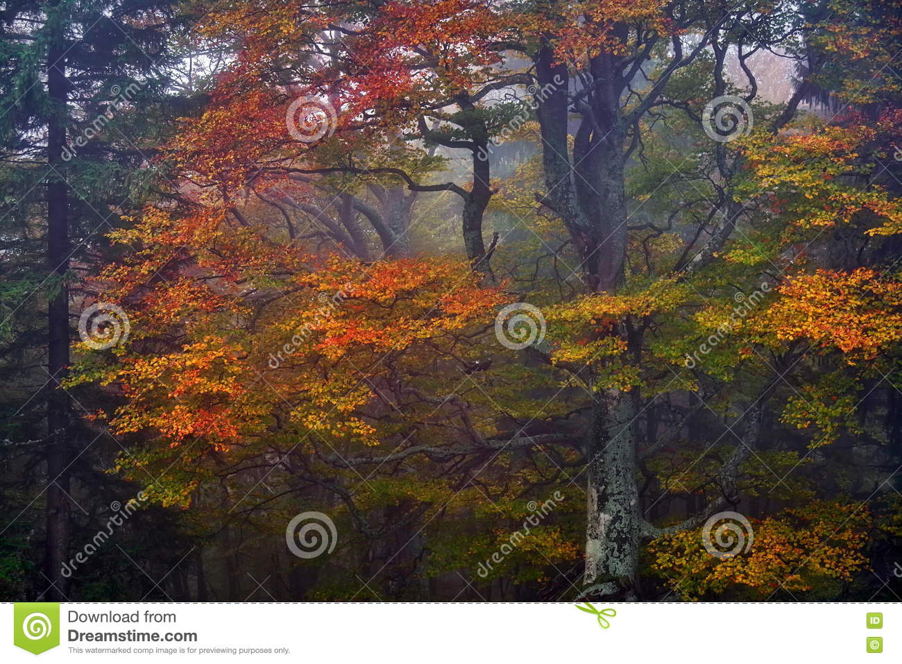 Autumn landscape. Forest and autumn. Fall colors in a tree, in the evening