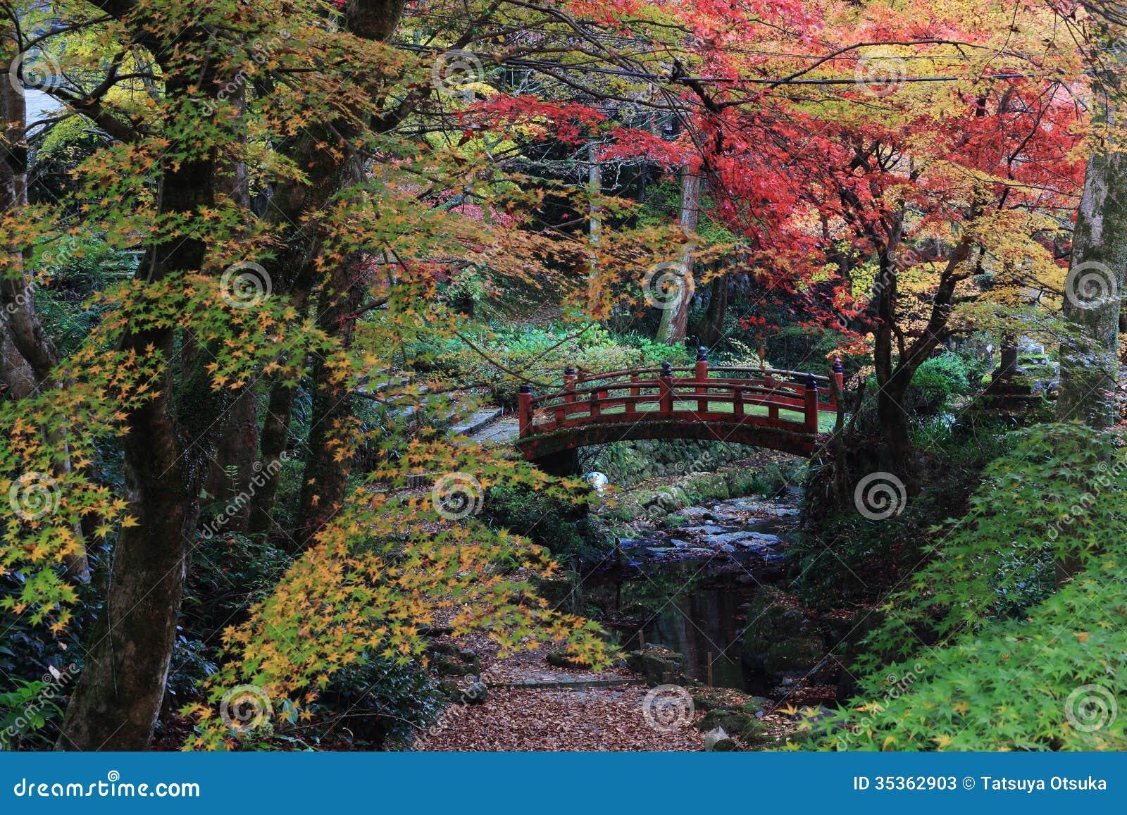 Fall colors in japanese garden stock photos image 35362903 for Japanese garden colors