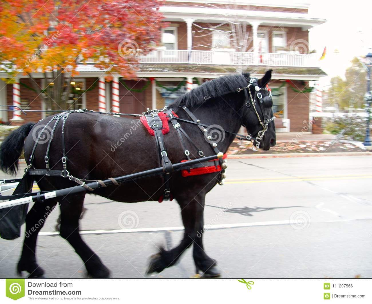Carriage horse with fall colors and vintage building background
