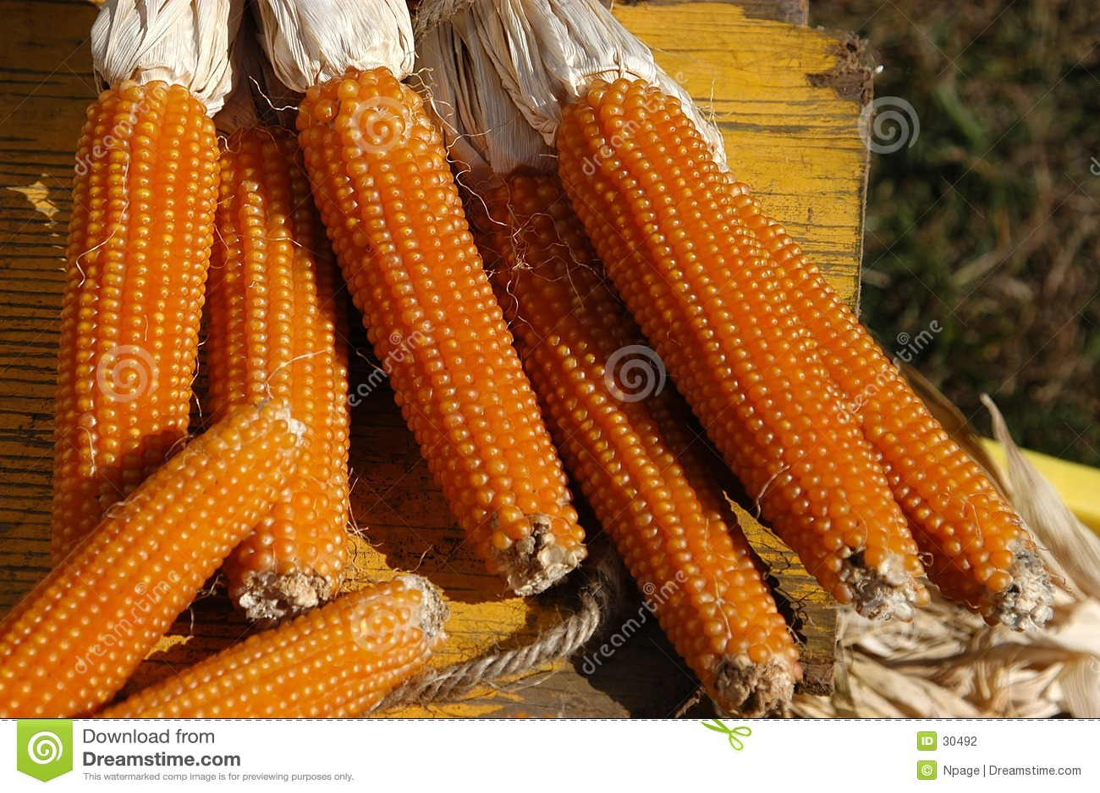 Download Fall-Ernte II stockfoto. Bild von ernte, landwirte, gelb - 30492