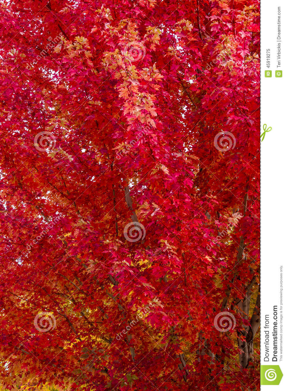 Fall-Farbe in der Stadt