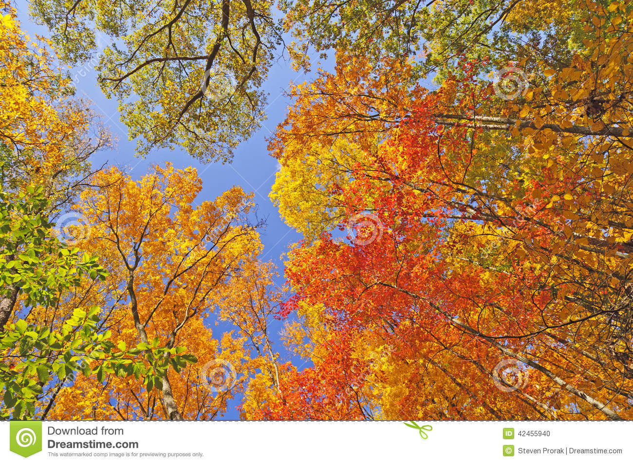 Fall-Farben in Forest Canopy