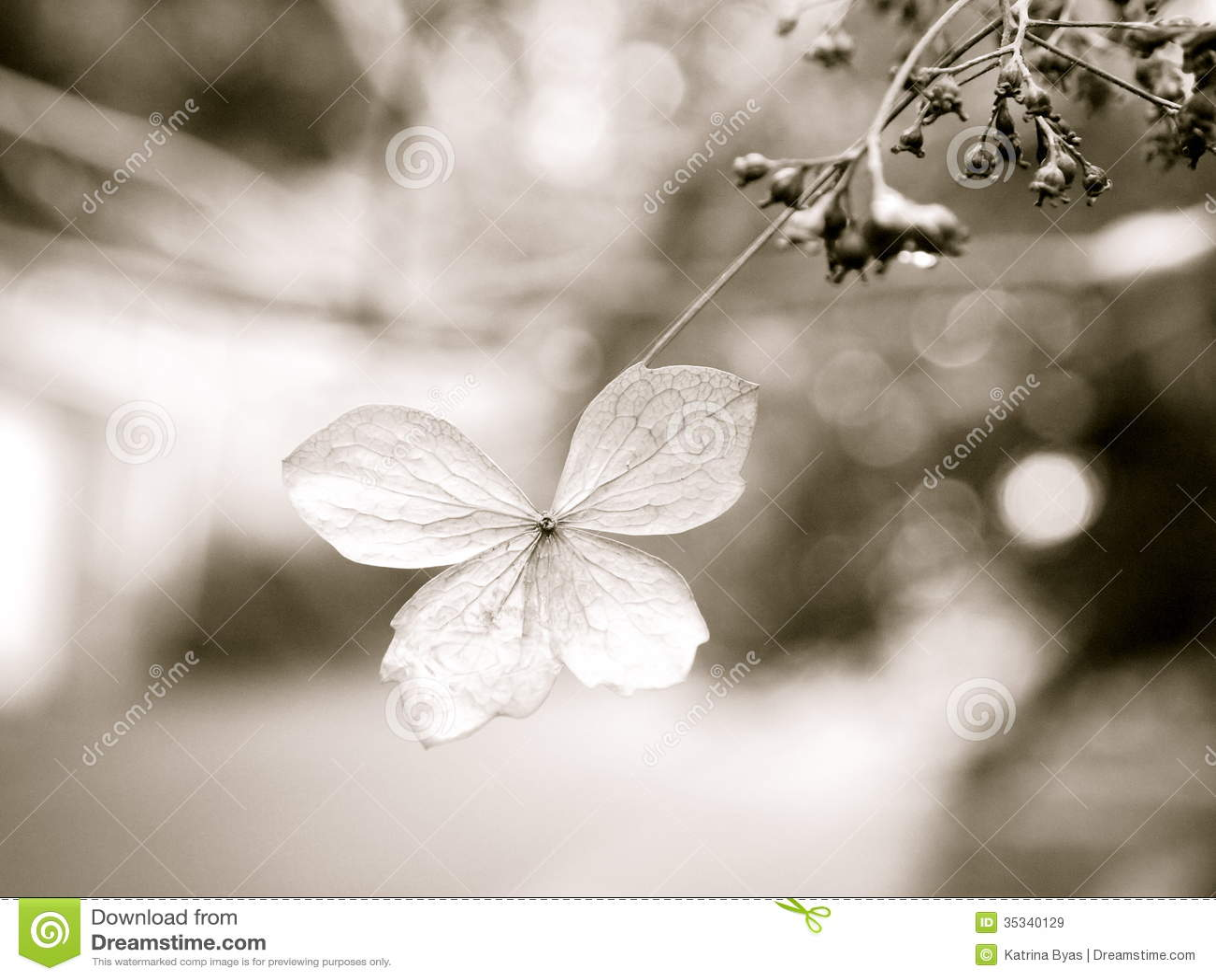 Fall Flower Stock Image Image Of Rain Thorn Fall Leaf 35340129