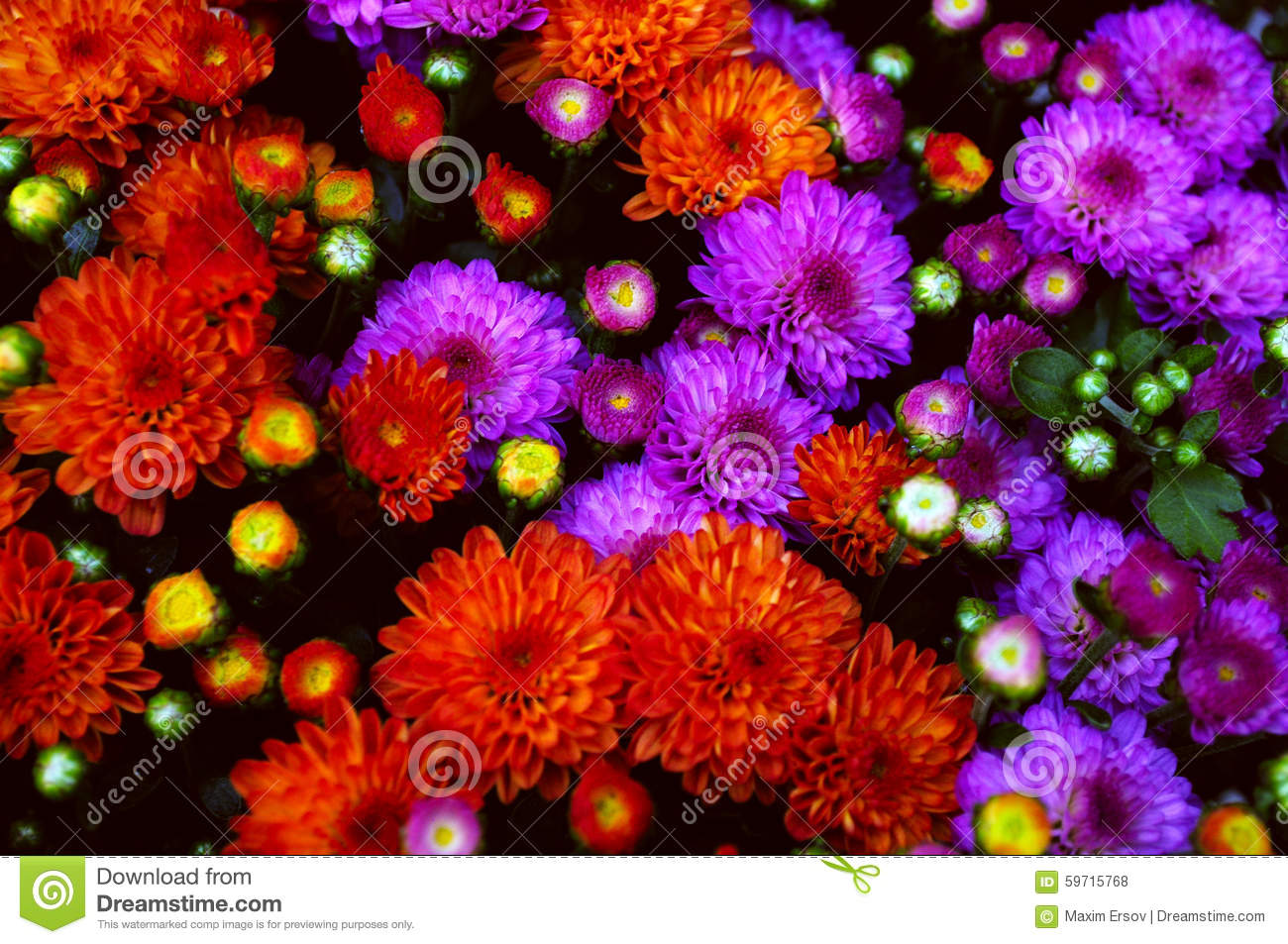 Flowers fall home design ideas beautiful fall flowers stock photo image 45504442 izmirmasajfo