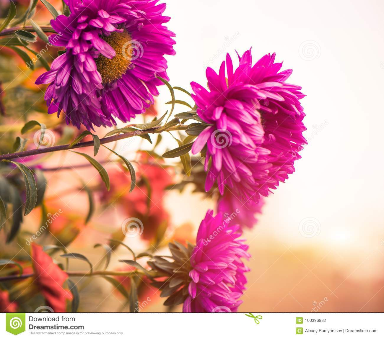 Fall Flowers Stock Photo Image Of Closeup Bloom Nature 100396982