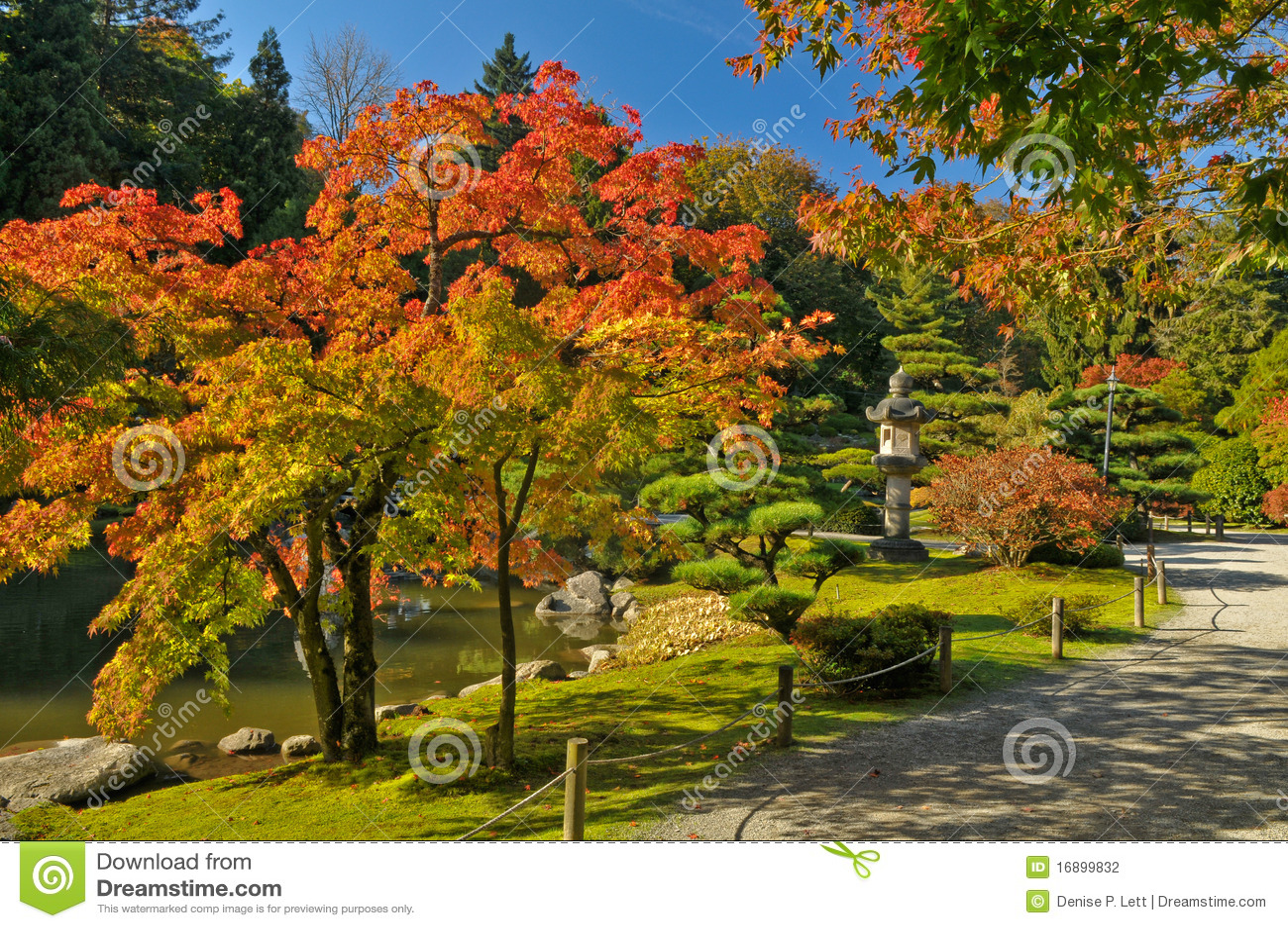 Fall Foliage Along Japanese Garden Path Stock Photo - Image of fall ...