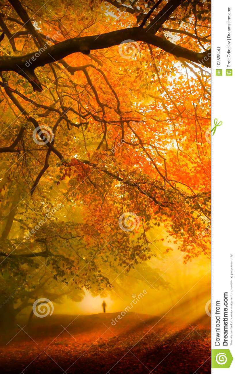 Fall forest cell wallpaper background