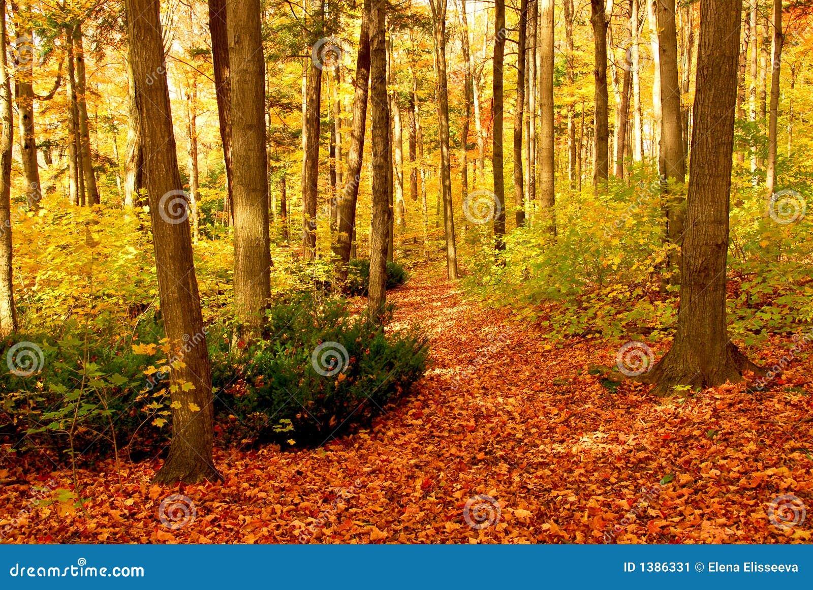 fall leaves wallpaper desktop