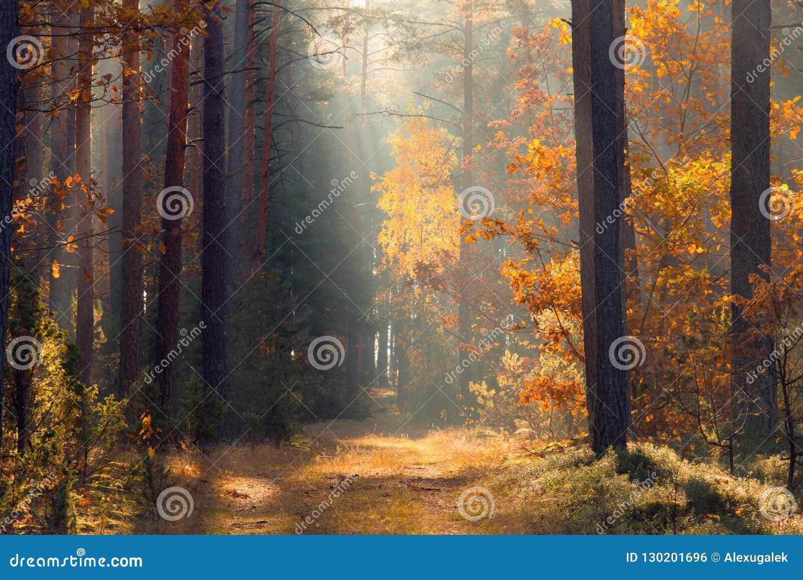 Fall Forest Forest med solljus Bana i skognedgånglandskap höstbakgrundscloseupen colors orange red för murgrönaleaf shadows den b