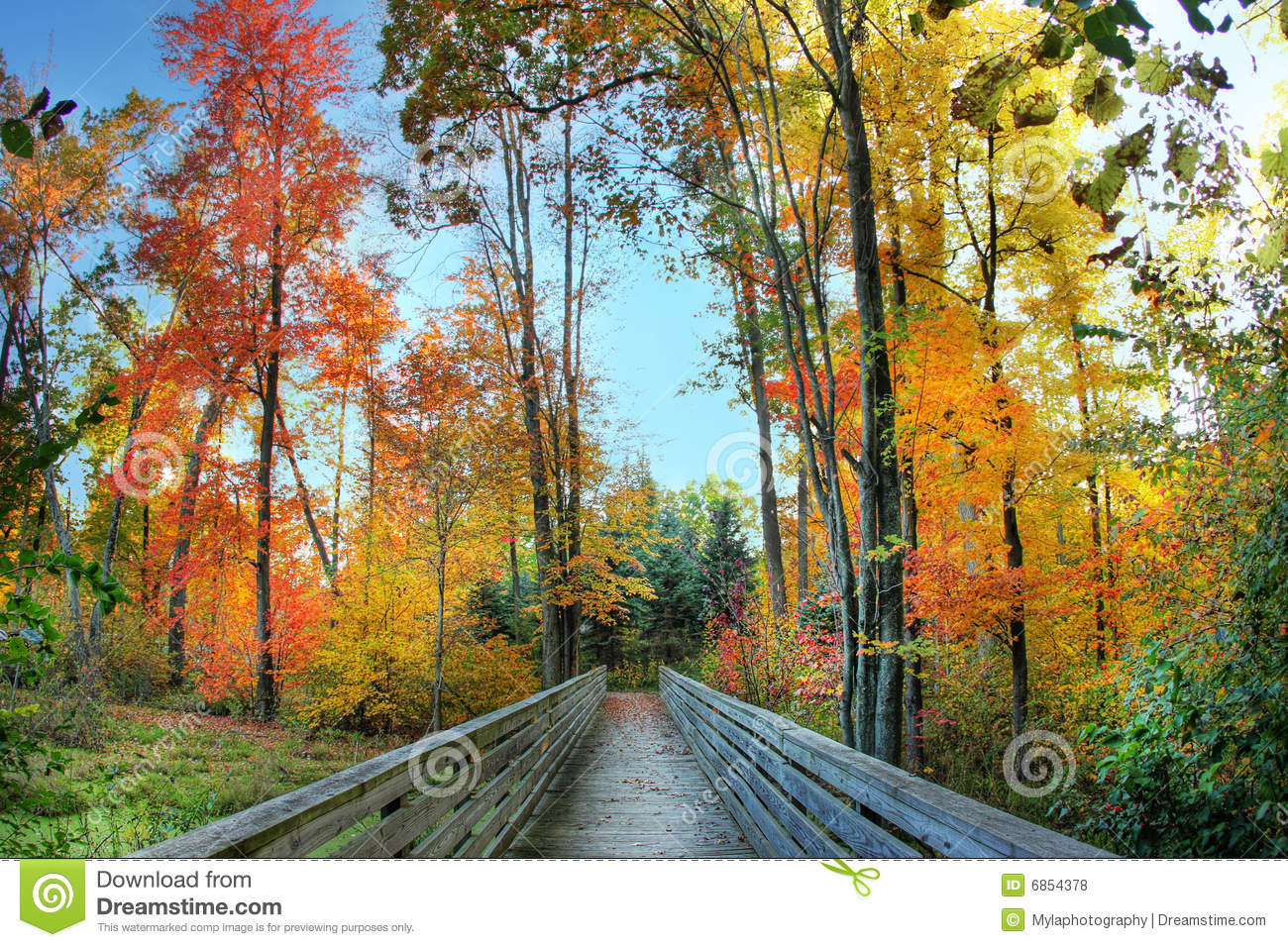 Beautiful fall path to the forest with colorful trees on each side