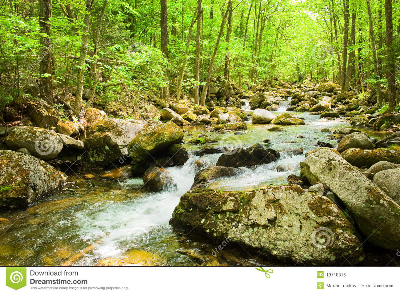 Fall forest stream in russian primorye