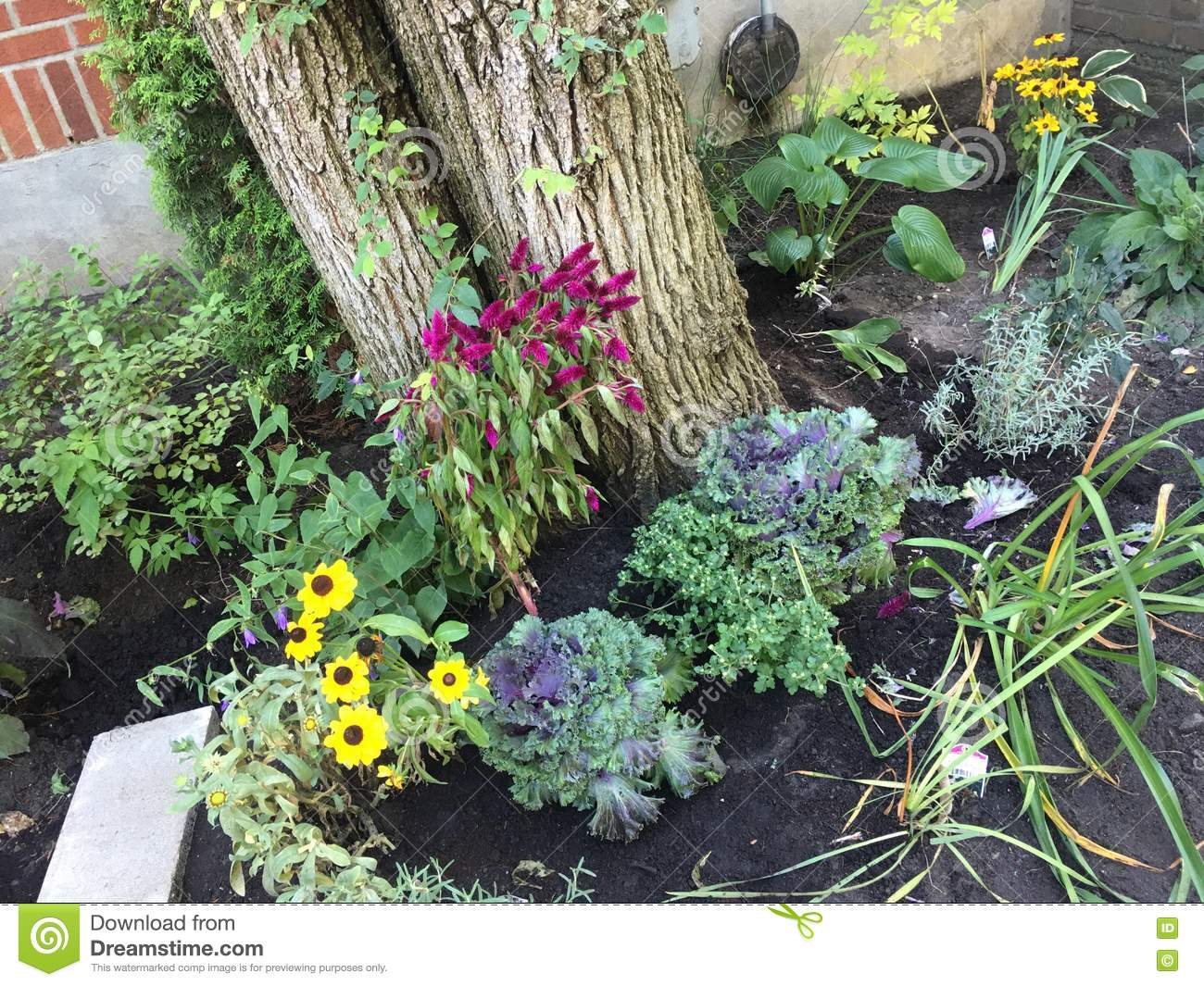 Fall garden with annuals around tree stock image image of download fall garden with annuals around tree stock image image of flowering blossoming izmirmasajfo