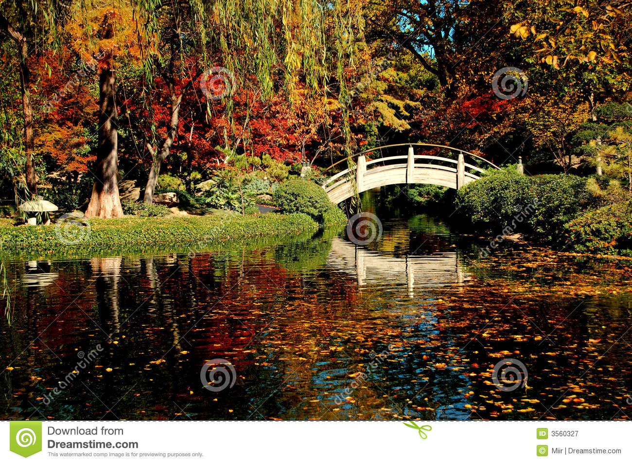 Fall garden foliage and color royalty free stock photography image 3560327 - Gardening in fall ...