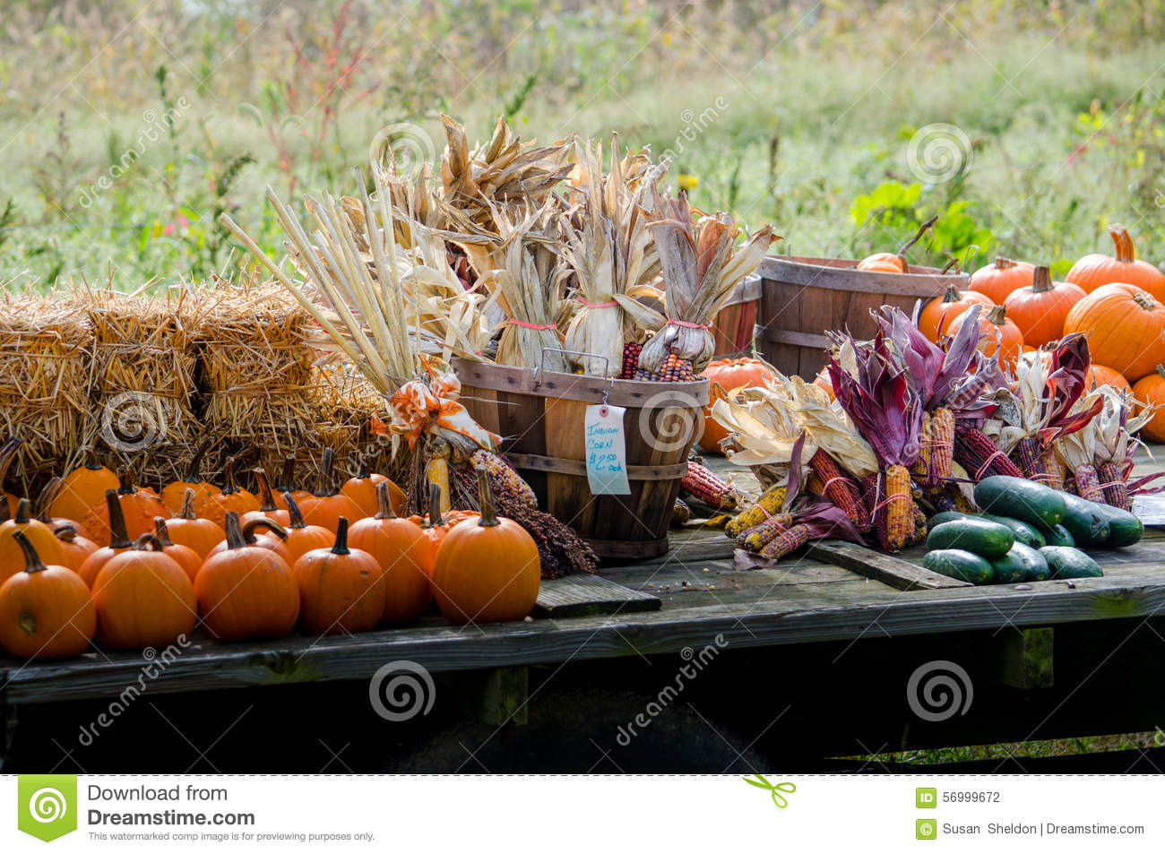 Beautiful fall harvest is for sale for decorating fun indian corn