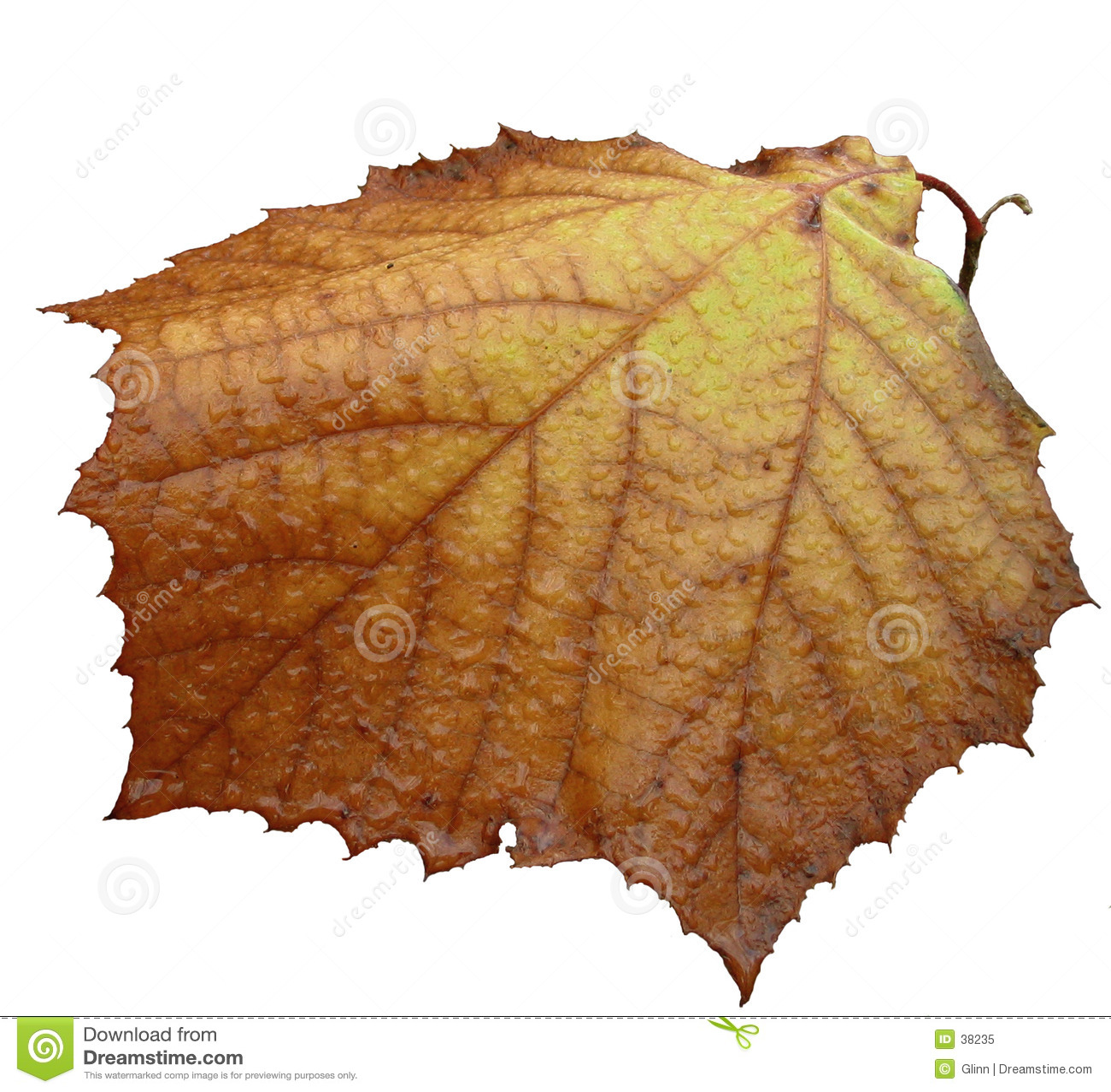 Fall isolerad sista leaf