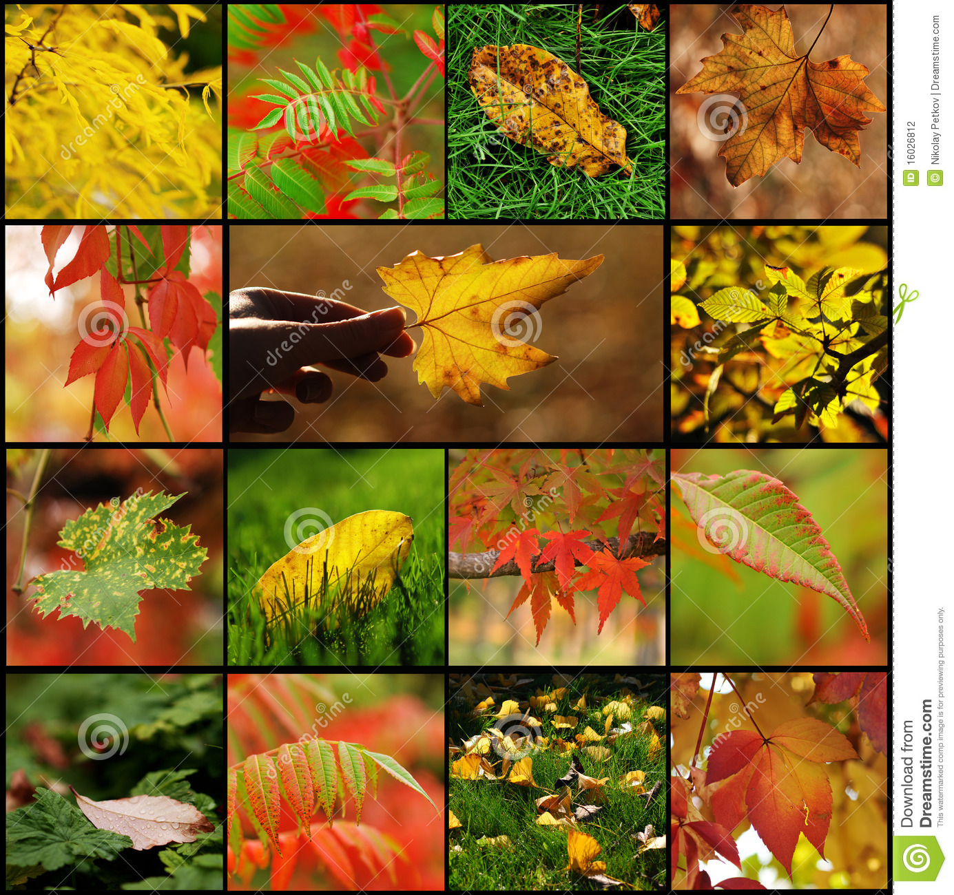 Fall Leaf Collage Stock Photography Image 16026812