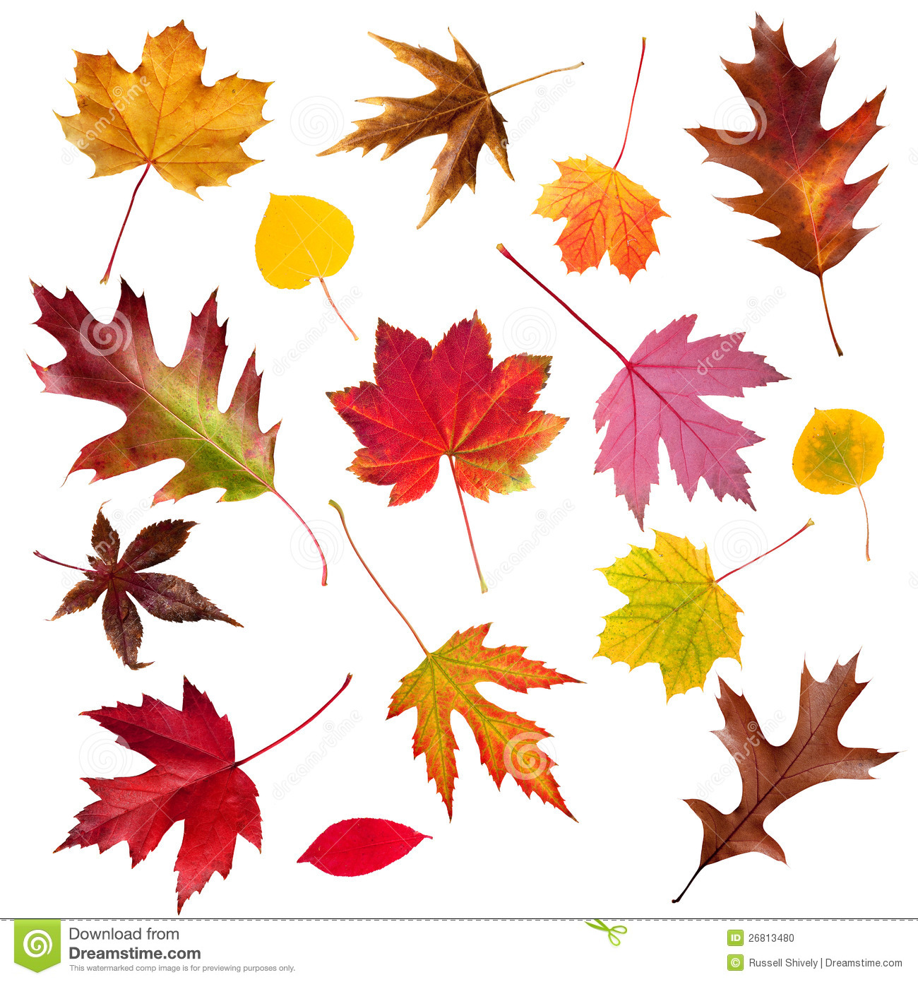 Fall Leaf Collection Stock Photo - Image: 26813480