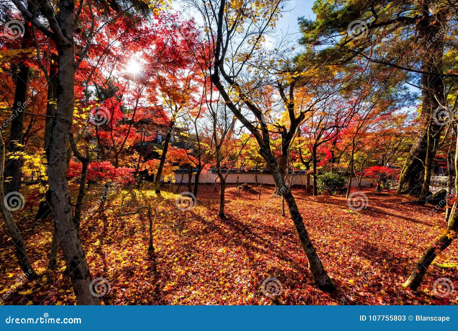 Fall Leaf Colors At Eikando Temple, Kyoto Stock Image - Image of ...