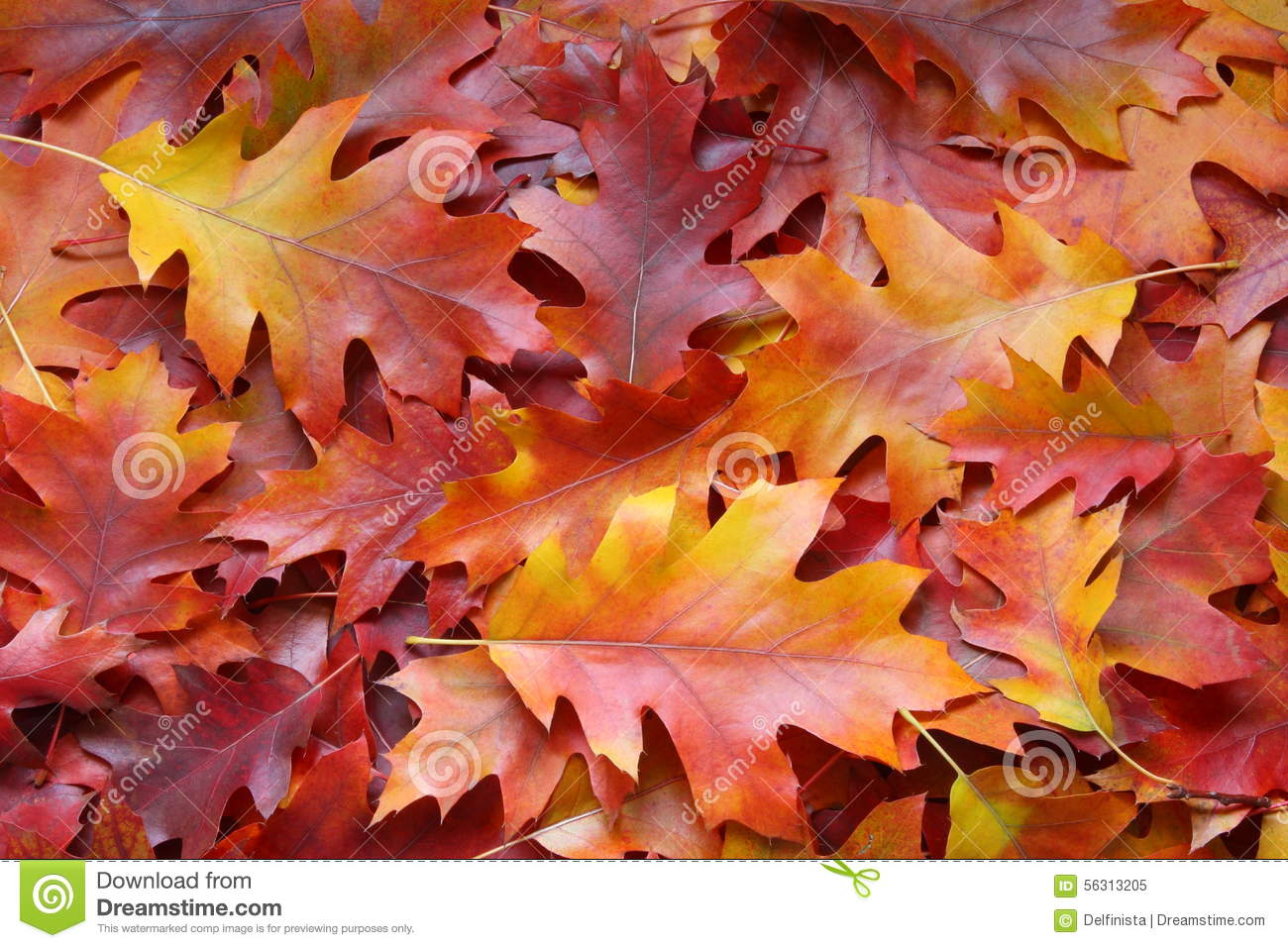 Fall leaves background stock photos stock photo image for Silverleaf com