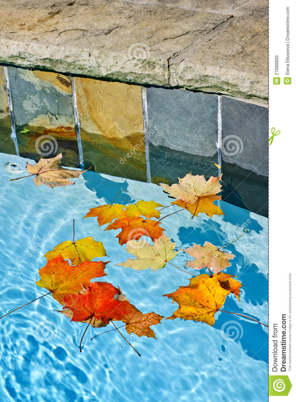 Fall Leaves Floating In Pool Stock Photo Image 27689800