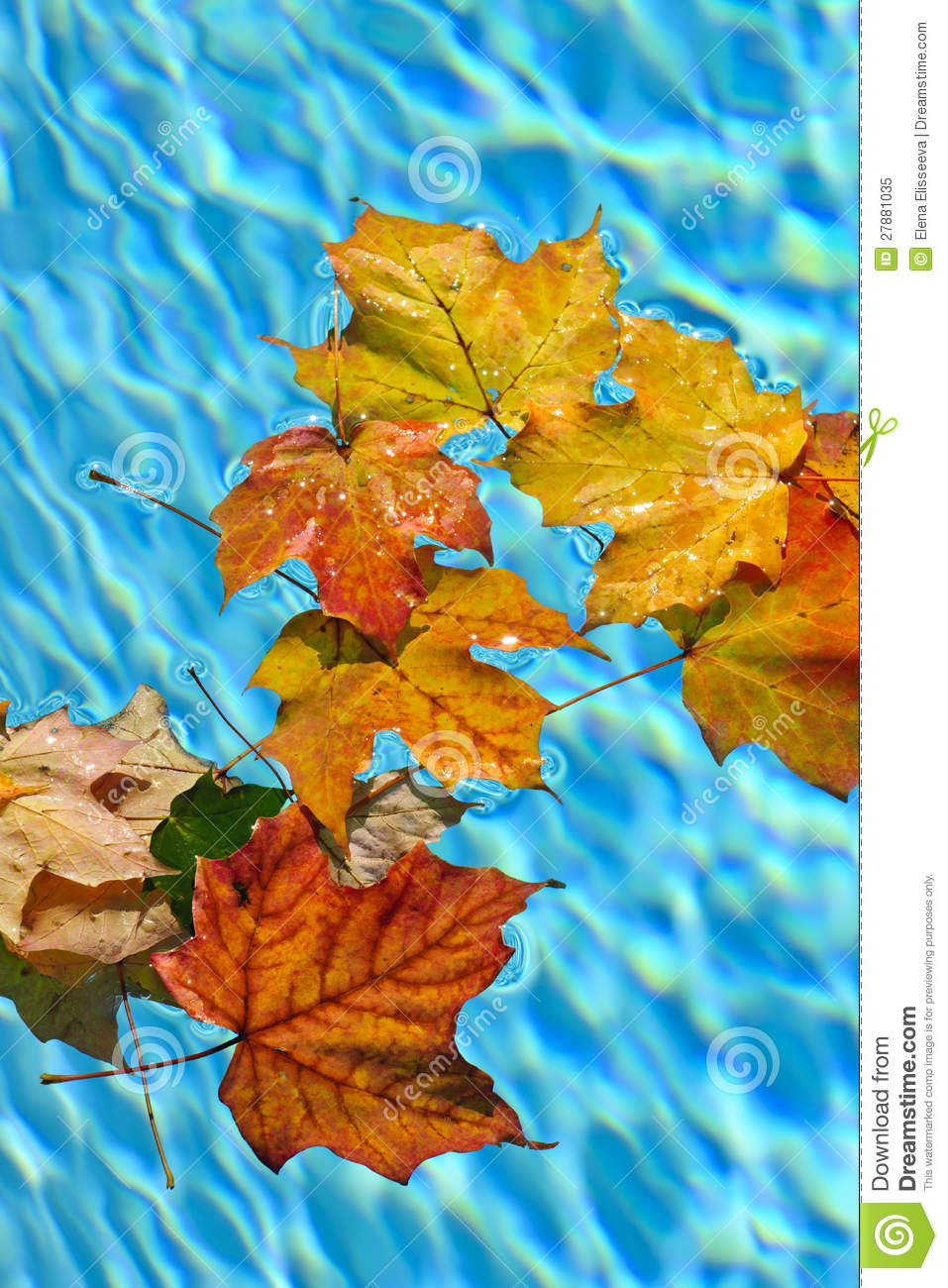 Fall Leaves Floating In Pool Stock Image Image Of