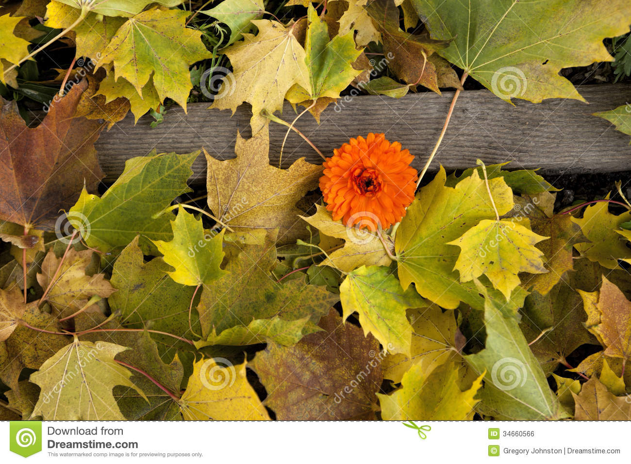 Fall leaves on ground with flower royalty free stock image image 34660566 - Flowers that bloom in autumn ...