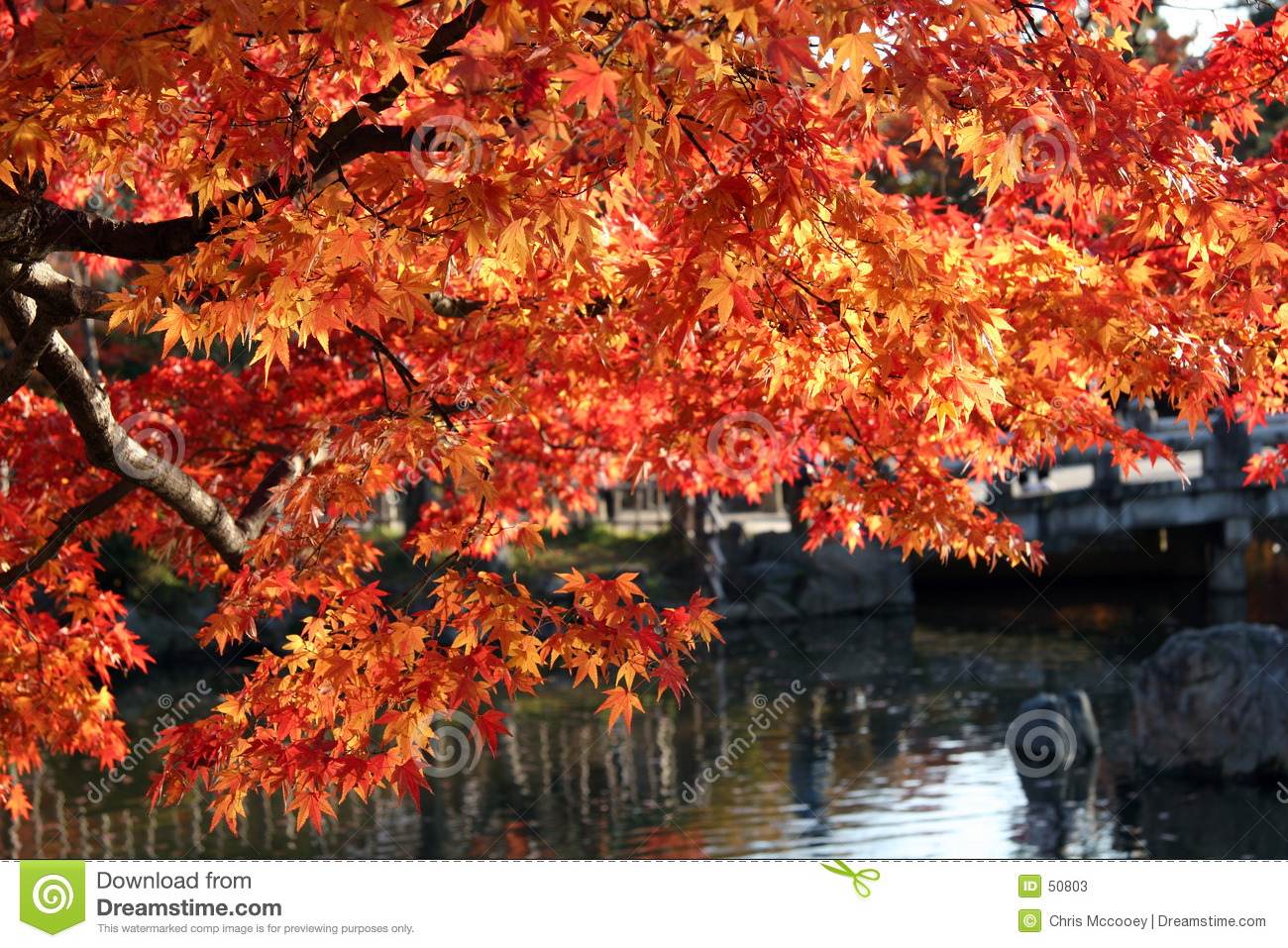 Fall leaves over water.