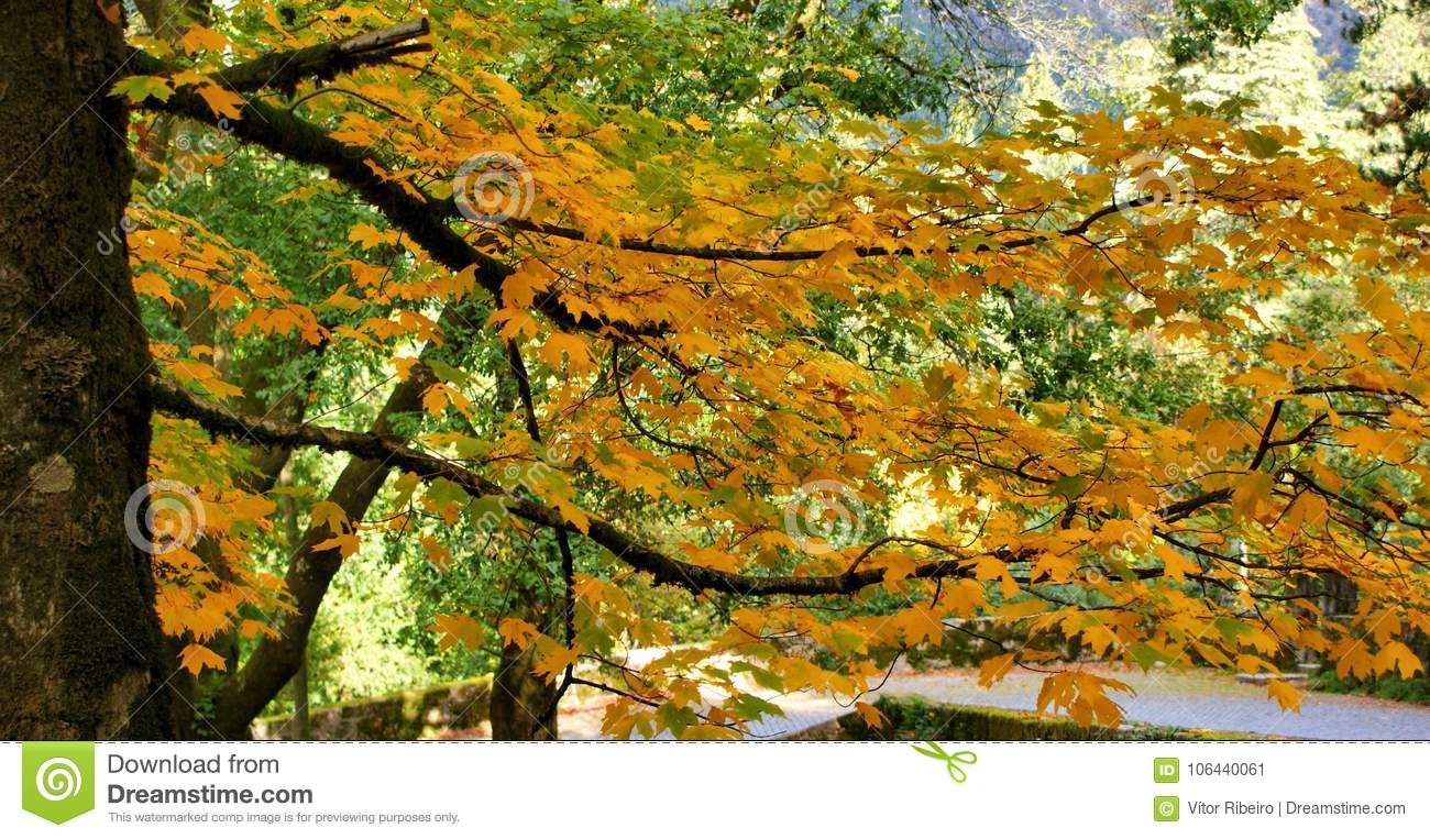 Fall leaves in parque Nacional Peneda Geres