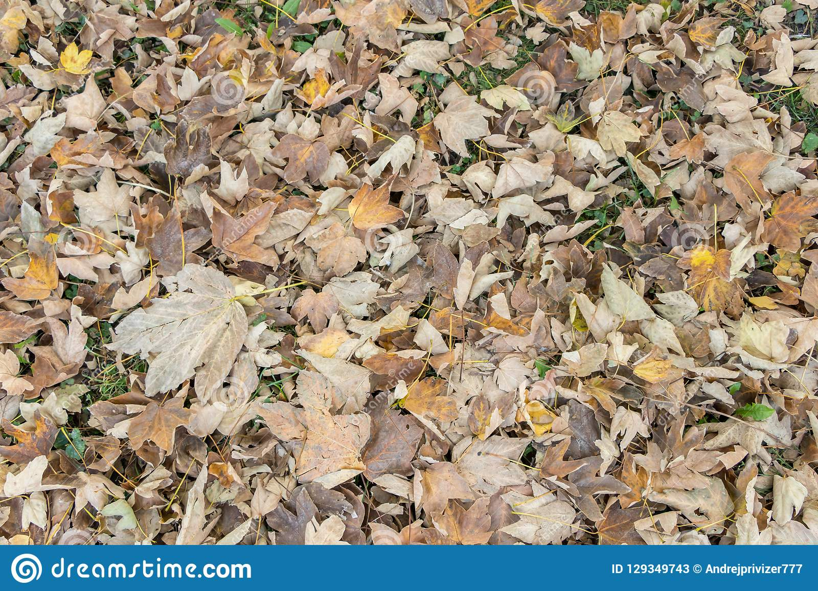 Fall leaves and the phenomenon of changing autumn colors