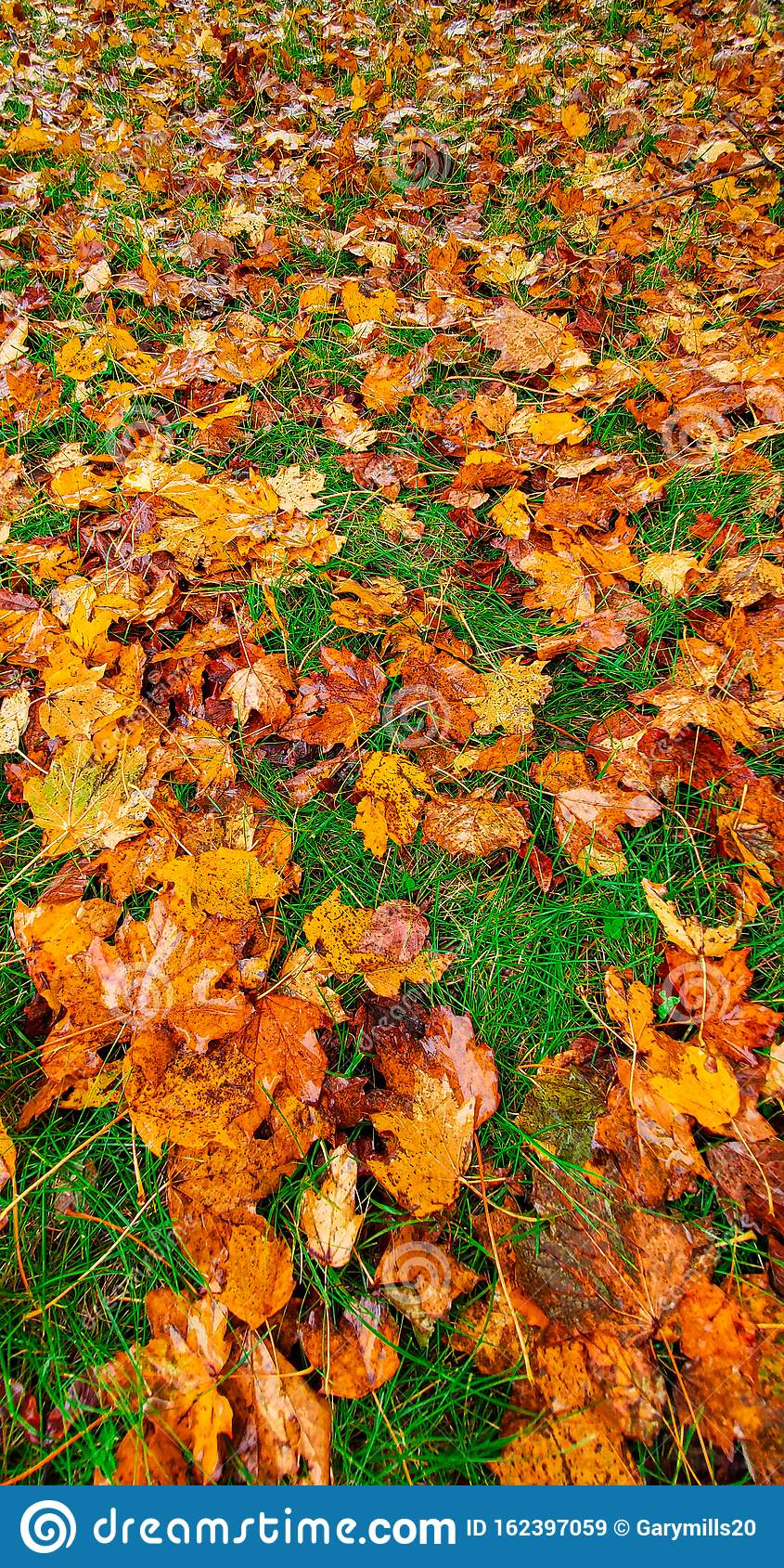 Fall Leaves On A Rainy Day Stock Image Image Of Galaxy 162397059